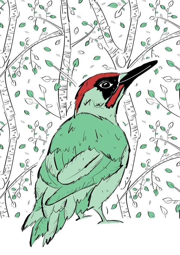Roo-tid Animal Illustrations - Mr Woodpecker