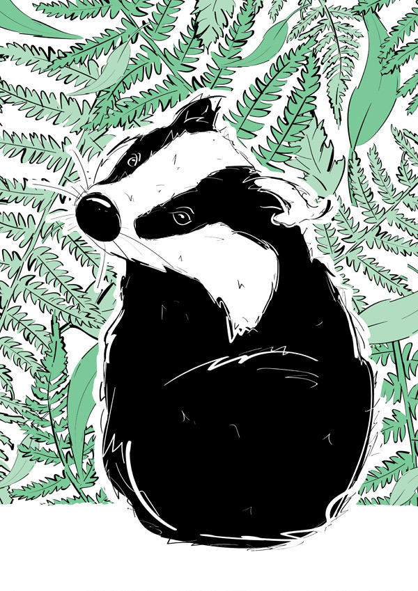 Roo-tid Animal Illustrations - Mr Badger