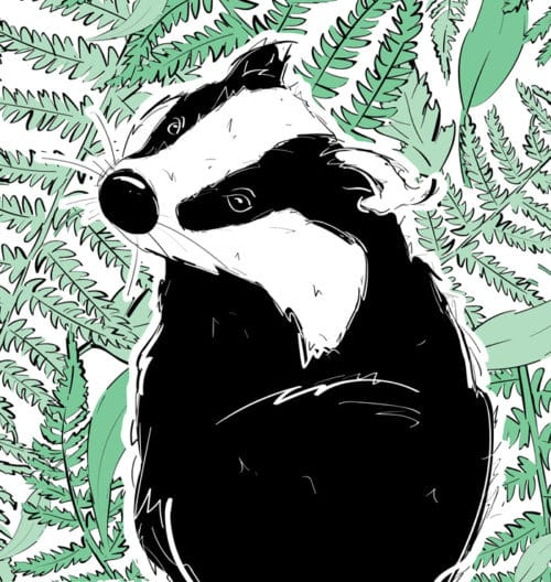 Dewlands Woodland Animals