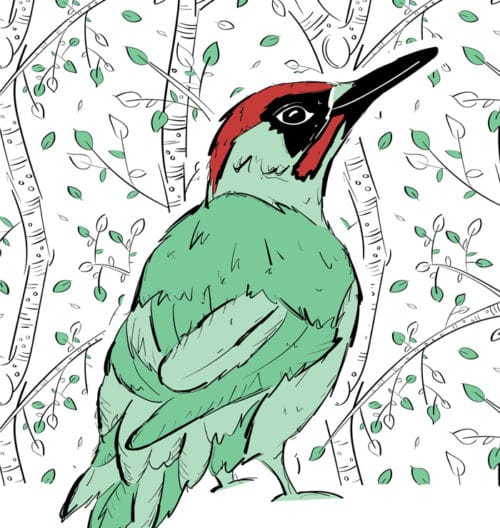 Mr Woodpecker Gifts
